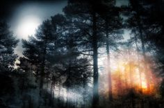 Forest Sun Moon Photograph by Douglas MooreZart - Forest Sun Moon Fine Art Prints and Posters for Sale