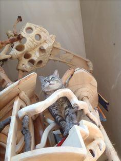Domusfelis - special playzones for cats - Unique pieces for unique cats, sculptures for cats, untreated precius wood: plum, apricot, seasoned poplar, birch, bamboo and piracanta. #catcastle #cattower #cattree #catcondo #felinelovers #petdesign #amazingcatscratching #catscratchforniture #cathouse