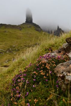 """"""" Some heather fading into autumn, with Old Man of Storr and Needle rock fading into clouds behind. Isle of Skye, Scotland """""""