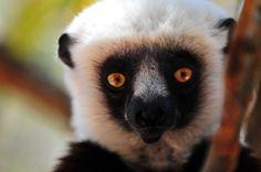 Adventure Travel: Madagascar - A Coast to Coast Expedition by Levison Wood