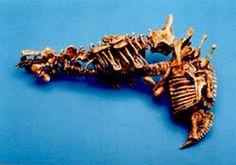 "Bone gun/""Gristle gun"" - from eXistenZ [1999] (480×336) #movies #film #guns #weapons"