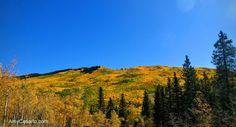 Have you seen the spectacular warm colorado autumn colors? - Denver Real Estate
