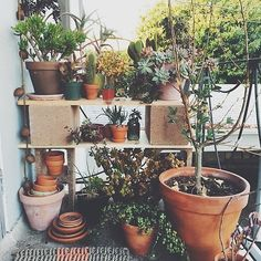 my cinder block and wood plant shelf #plants #shelves #diy #easy