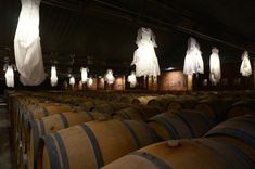 Chateau D'Arsac wine cellar with dresses hanging above the cellar