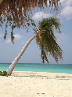 Seven Mile Beach, Grand Cayman Island.  Been there, done that and would love to do it again..and again...and again