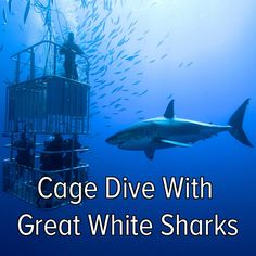 Bucket list: plan an adventure to cage dive with Great White Sharks!