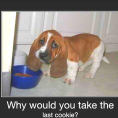 Sad little basset puppy. So cute.