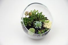 Succulent Terrarium by Brooklyn Botanic Garden, via Flickr