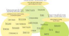 Kräuter, Standort, Übersicht Kräuter,Küchenkräuter, Sonne, Schatten, Halbschatten, Pflanzen, Das Wichtigste über Kräuter, mediterrane Kräuter, Küche, Balkon, Schatten