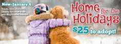 Help these animals find a home for the holidays http://www.austintexas.gov/adoptablepets