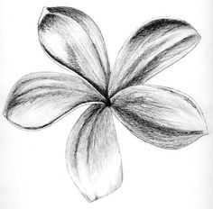 beginner charcoal drawing ideas - Google Search