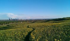 Nose Hill Park, looking onto downtown Hill Park, Vineyard, Outdoor, Outdoors, Vine Yard, Vineyard Vines, Outdoor Games, Outdoor Life
