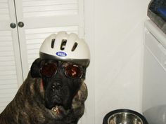 Bertha with her bicycle helmet on !