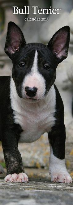 Bull Terrier Kalender Slimline 2013