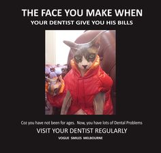 Looking for a great dentist? Vogue Smiles Melbourne provides exceptional affordable complete dental services-General and Cosmetic Dentistry. Funny Cat Photos, Cute Animal Photos, Smile Makeover, Funny Cute Cats, Dental Humor, Dental Problems, Dental Services, Sphynx Cat, Captions