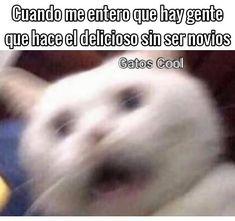 """191 Me gusta, 0 comentarios - Gatos Cool (@gatoscooloficial) en Instagram: """". . . #memesdegatoscool #gatoscool😸 #gatos_cool #eldelicioso #elsinrespeto #elmeteysaca…"""""""