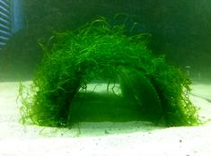 DIY Mesh Moss Tunnel - PetDIYs.com