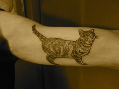 Cat Tattoo by Lyam Sparkes
