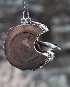hollowed out piece of tree for a bird feeder. I really like this.
