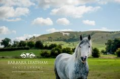 Westbury White Horse in Wiltshire, Great Britain, UK Equestrian, horse photography, by Wiltshire photographer Barbara Leatham