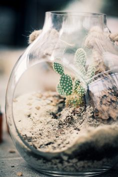 Desert Terrariums With Terrain | Free People Blog #freepeople