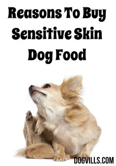 These Reasons To Buy Sensitive Skin Dog Food provide information on the many reasons your dog may be uncomfortable in its own skin