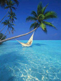 Hammock tied to palm tree on the blue ocean...sigh ♥♥♥♥