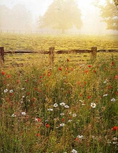 a meadow...one day i will live near a meadow, maybe my next life..