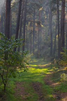 Forest 09 by Eiande on DeviantArt Life Is Beautiful, Beautiful Images, Landscape Photography, Nature Photography, Parks, Environment Painting, Lake Beach, Forest Path, Back Road