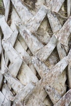 close up of a palm tree trunk bark Stock Photo - 1590896