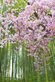 Photos — Bamboo forest by Raheel Shahid. forest