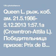 Queen L.  рыж. коб. ам. 21.5.1986- 5.12.2013 1:57.1a (Crowntron-Attila L). Победительница призов: Prix de Belgique (дважды), Prix d'Amérique, Prix de France . Grobois.