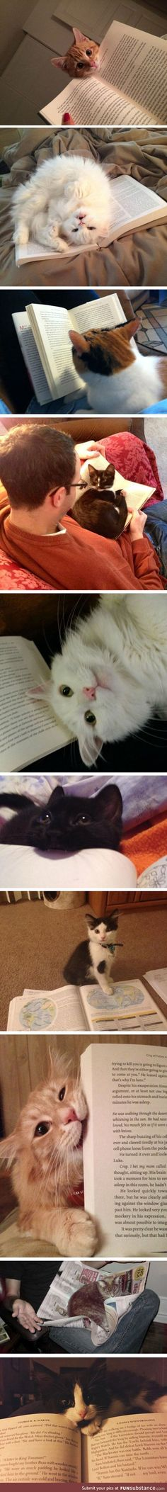 Cats Who Won't Let You Read Your Book