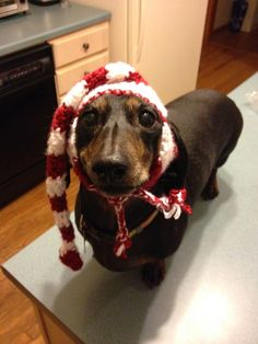 That's the Long & Short of It: Holiday Elf Hat for Dogs - Crochet Pattern