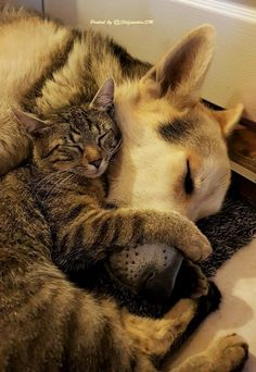 animals, dogs, cats, friends