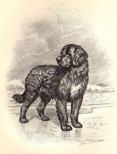 NEWFOUNDLAND DOG ON DOCK DISTINGUISHED MEMBER GREAT ANTIQUE STYLE PRINT POSTER