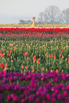 What You Need to Know Before You See the Woodburn Farm Tulips // Local Adventurer Solo Travel, Travel Usa, Travel Tips, Visit Oregon, Crater Lake National Park, Tulip Festival, Enjoy Your Vacation, Oregon Travel, Road Trip Usa