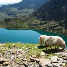 Some of the most stunning natural beauty exists on our own island. Snowdonia national park in wales offers stunning landscapes. Visit an eco resort there: https://www.ecocompanion.com/lodges/bryn-elltyd-eco-guesthouse#10/52.9269/-4.0774