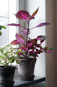 Flowers Nature, Love Flowers, Fresh Flowers, Indoor Garden, Indoor Plants, Home And Garden, House Plants Decor, Plant Decor, Compact Living