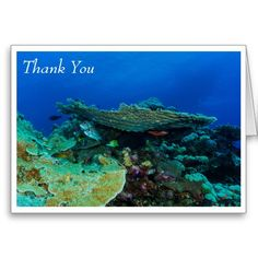 This greeting card features a group of tropical fish of different species hanging out together under a plate coral on Australia's Great Barrier Reef. Easily customizable by simply replacing the text with your own.