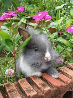 Cute bunny enjoying the garden.