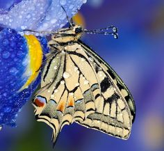 """Butterflies always seem to me more like living pieces of art than insects, such as those pictured in this celebration of """"nature's canvases.""""    Check out more Photo of the Day posts here."""