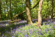 Walking amongst the bluebells on a lovely sunny day in the Lake District Let Your Hair Down, Short Break, Body And Soul, Cumbria, Lake District, The Great Outdoors, Sunny Days, Woodland, Walking