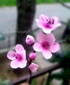 Gumpaste cherry blossoms - Fiori di ciliegio in gum paste