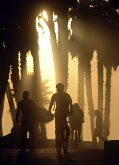 VENTURA SUNSET: The late afternoon sun shines through palm trees and silhouettes a bicyclist, surfer, and others as they enjoy the afternoon Wednesday along the promenade at Surfers Point in Ventura Wednesday.