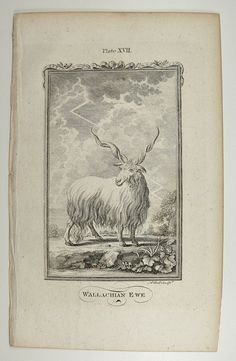 antique engraving