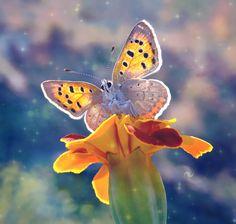 A cute little butterfly