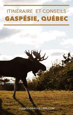 15 jours pour découvrir la Gaspésie ! Après un road trip sur les rives du Saint-Laurent, qui t' as emmené de Montréal à Tadoussac en passant par le Fjord du Saguenay, un nouveau voyage québécois t'attend. Essaieun itinéraire qui t'offrira la chance de voir des animaux sauvages et des paysages à couper le souffle : La Gaspésie ! North And South, Travel Photographie, Les Fjords, Rives, Road Trip, Souffle, Photos Voyages, Parcs, Quebec