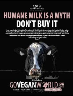ASA rejected claims from dairy industry that advert was 'misleading' readers into thinking farms were not complying with animal welfare standards Reasons To Be Vegan, Why Vegan, Vegan Vegetarian, Food Technology, How To Become Vegan, Vegan Memes, Best Ads, Animals Of The World, Advertising Campaign