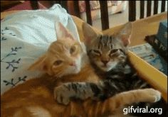 Gato amor incondicional